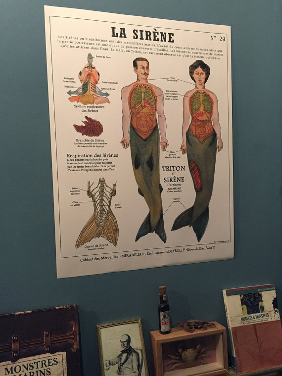 planches-anatomiques-de-creatures-imaginaires